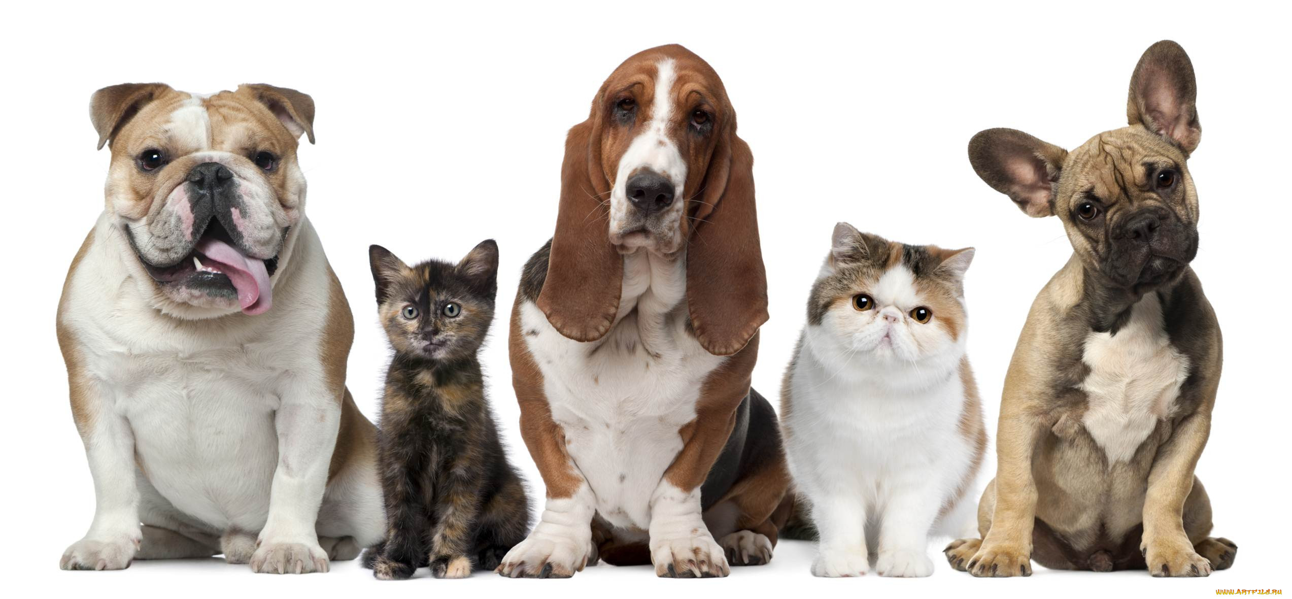 the favorite pet a comparison of cats and dogs as pets